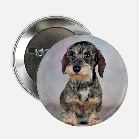 "Wirehaired Dachshund 2.25"" Button"