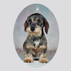 Wirehaired Dachshund Oval Ornament