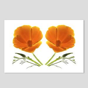 Golden Poppy Flower, 8 Postcards