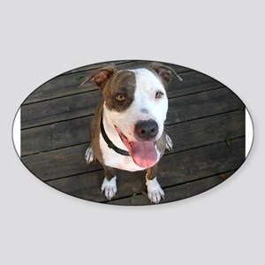 Bully dog Oval Sticker