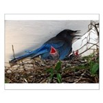Baby Steller's Jays Small Poster
