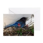 Baby Steller's Jays Greeting Card