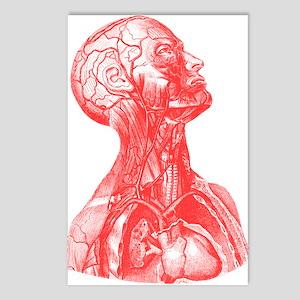 Vintage Medical Drawing Postcards (Package of 8)