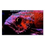 Suckerfish Rectangle Sticker 50 pk)