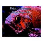 Suckerfish Small Poster