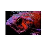 Suckerfish Rectangle Magnet (100 pack)