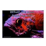 Suckerfish Postcards (Package of 8)