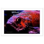 Suckerfish Large Poster