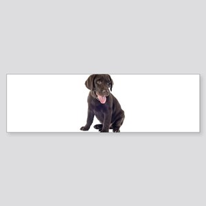 Chocolate, Lab, puppy Bumper Sticker