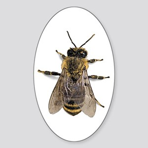 Big Honey Bee Oval Sticker