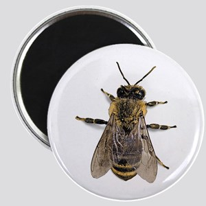 Big Honey Bee Magnet