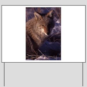 Coyote Photo Yard Sign