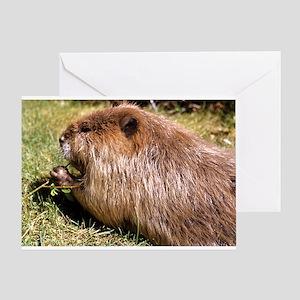 Beaver Photo Greeting Card