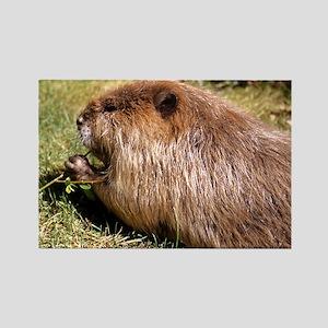 Beaver Photo Rectangle Magnet