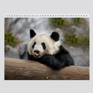 Panda Bear Wall Calendar