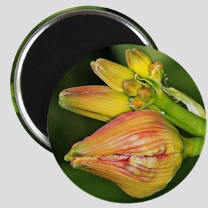 Lilly Magnet