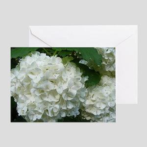 White Hydrangeas_2 Greeting Cards