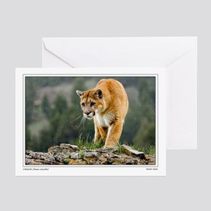 Prowling Cougar Greeting Cards (Pk of 10)