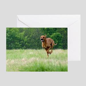 JUBA LEE RIDGEBACK Greeting Card