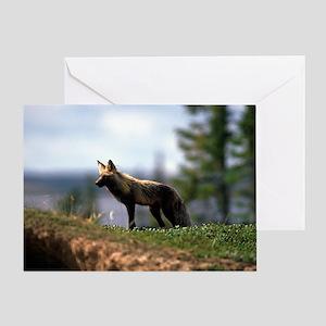 Cross Fox Greeting Card