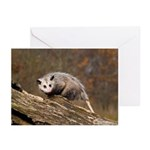 Opossum Greeting Cards (Pk of 20)