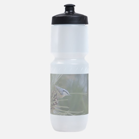 Red Breasted Nuthatch Sports Bottle
