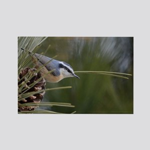 Red Breasted Nuthatch Magnets
