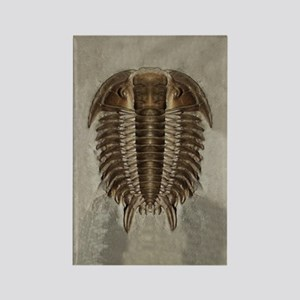 Trilobite Fossil Rectangle Magnet