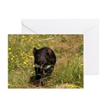 Tasmanian Devil Greeting Cards (Pk of 20)