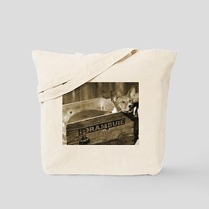 Kiwi in her box Tote Bag