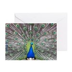 Showy Peacock Photograph Greeting Cards (Pk of 20)