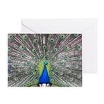 Showy Peacock Photograph Greeting Card