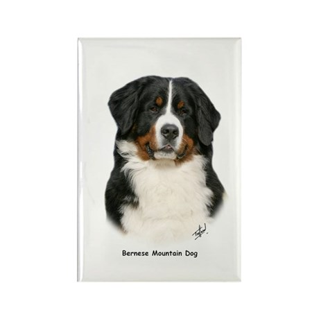 Bernese Mountain Dog 9Y348D-094 Rectangle Magnet (