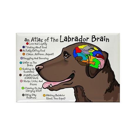 Chocolate Lab Brain Rectangle Magnet