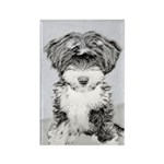 TIbetan Terrier Rectangle Magnet (100 pack)