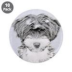 TIbetan Terrier 3.5