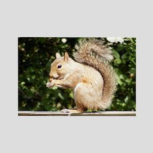 Squirrel Smiling Rectangle Magnet
