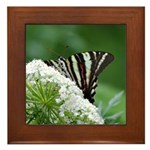Zebra on Lace Framed Tile