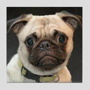 Cute Pug Puppy photo portrait Tile Coaster