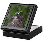 Harassed Eagle Keepsake Box
