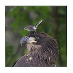 Harassed Eagle Tile Coaster