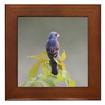 Blue Grosbeak Framed Tile