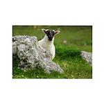 Peek-a-Boo Lamb
