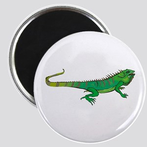 Iguana Magnet
