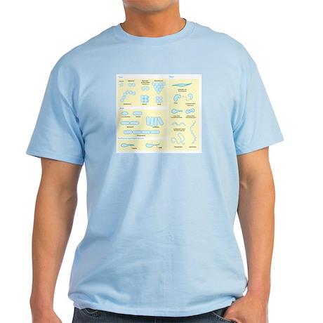Morphology Light T-Shirt