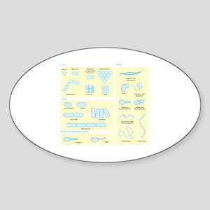 Morphology Oval Sticker