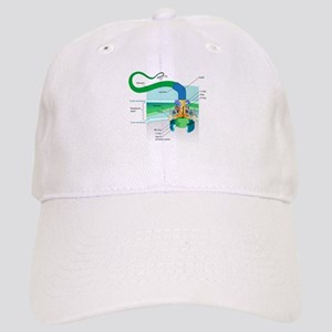 Morphology Cap