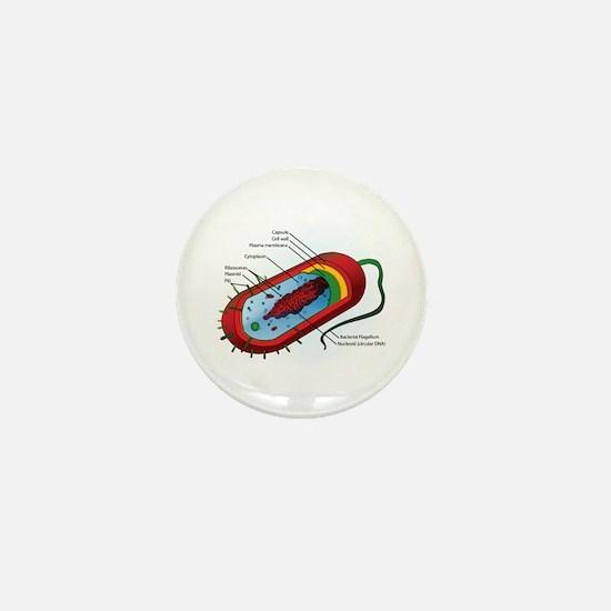 Bacteria Diagram Mini Button