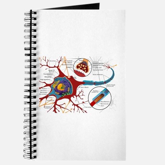 Neuron cell Journal