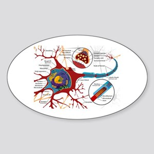 Neuron cell Oval Sticker